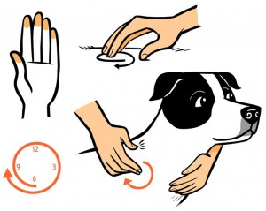 Zeichnungen Lili Chin mit freundlicher Genehmigung von Jetta Reis © 2012; www.makeyourdogsmile.net